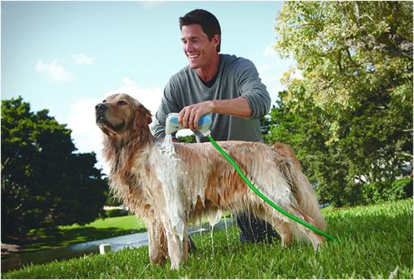 Cách chăm sóc chó