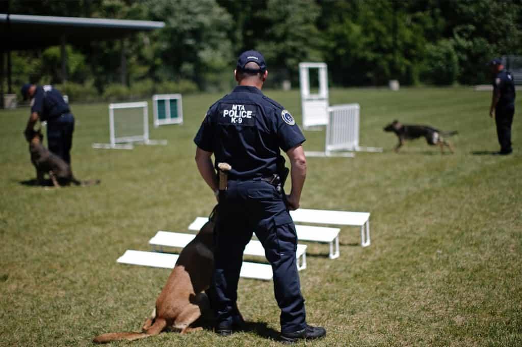 Đào tạo huấn luyện chó