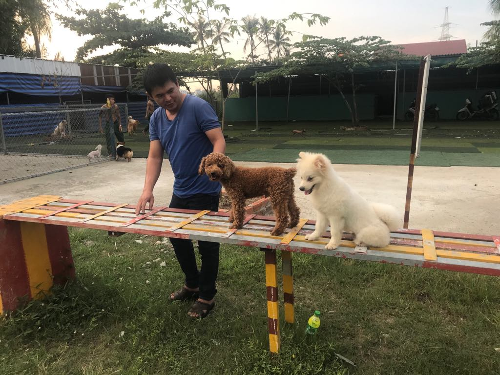 Dịch vụ huấn luyện chó cảnh, chó nghiệp vụ Trung Đức