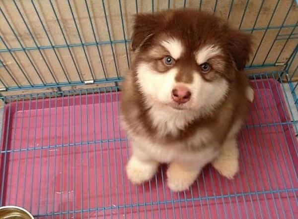 Dịch vụ chăm nuôi chó theo ngày