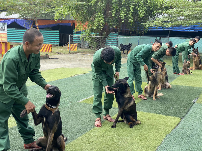 huấn luyện chó tầm cao