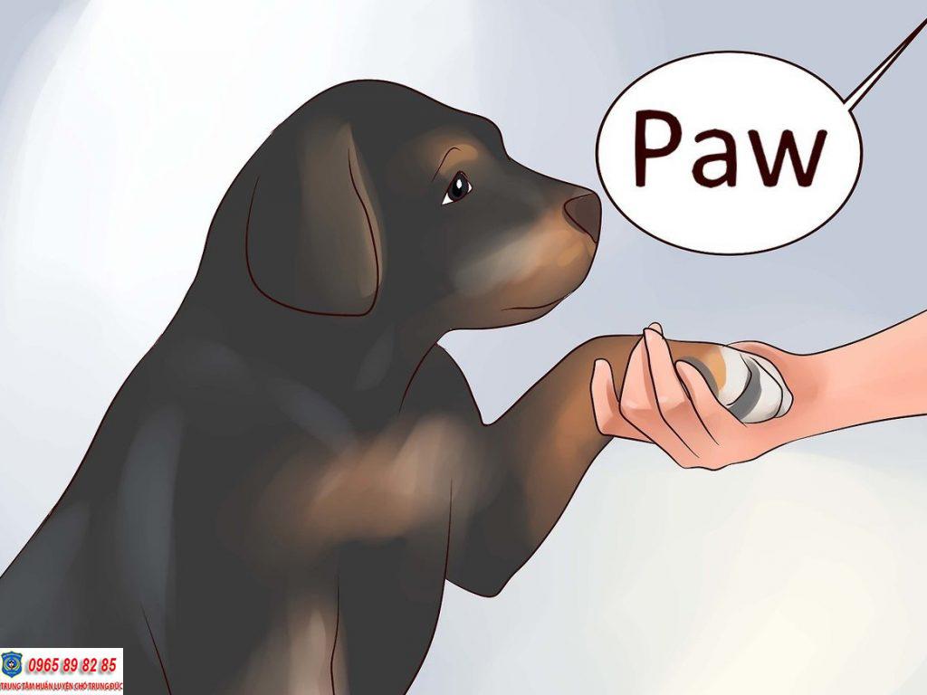 huấn luyện chó bắt tay