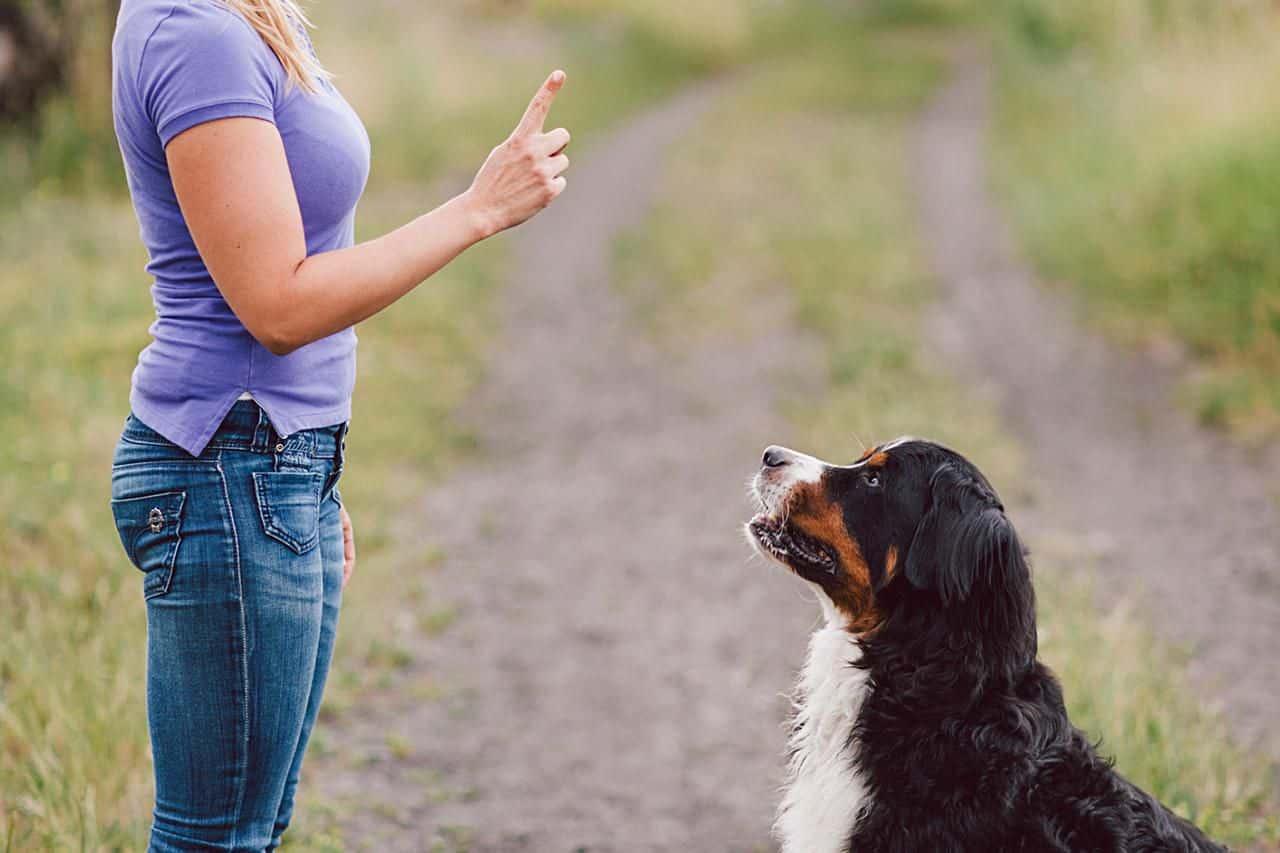 Huấn luyện chó thành công ngay tại nhà tại sao không