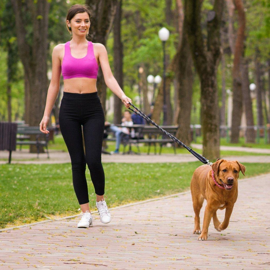 Huấn luyện chó đi theo chủ