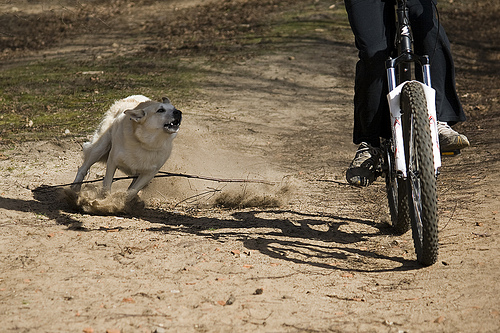 Huấn luyện chó không chạy ra đường