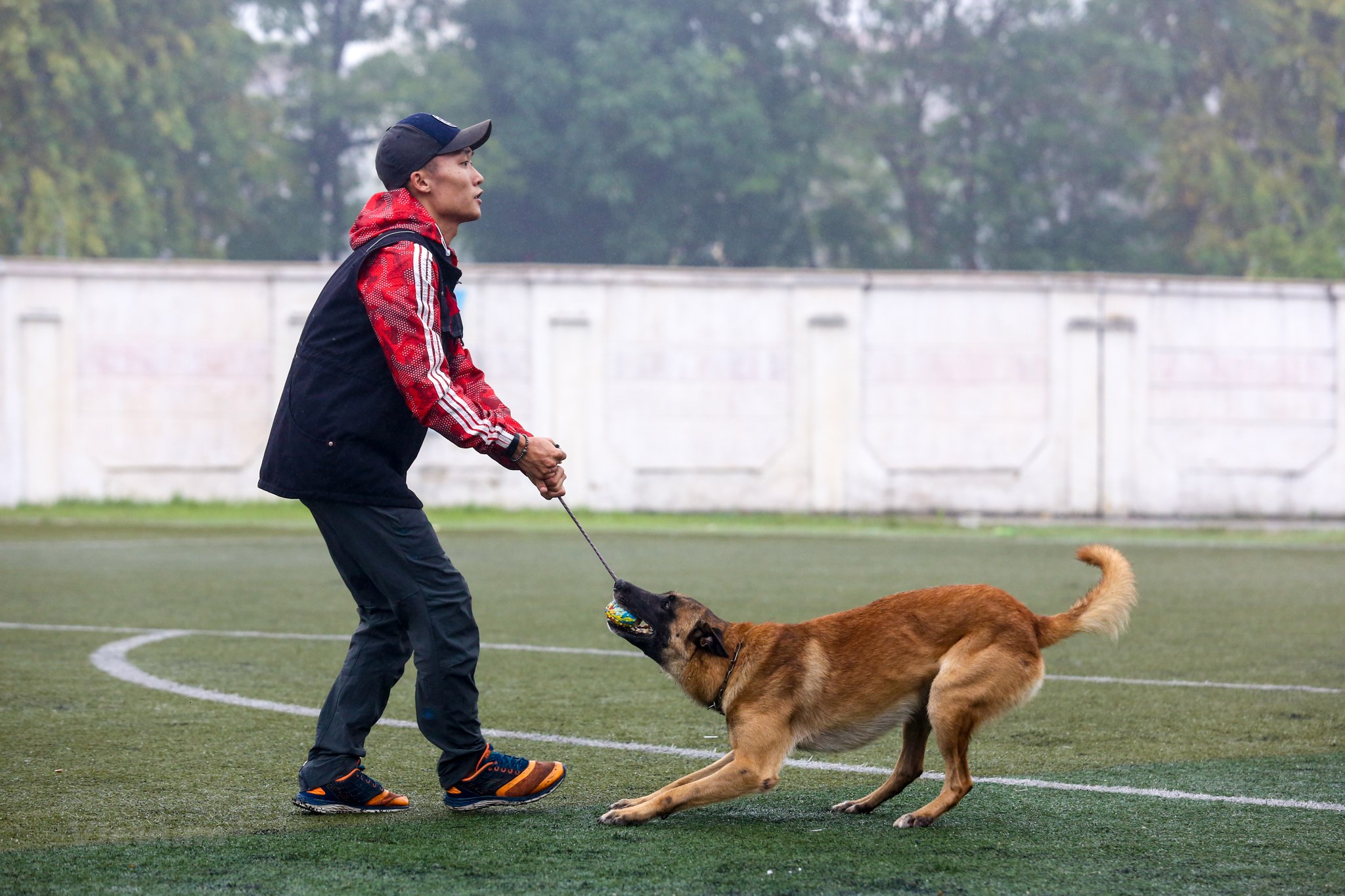 Huấn luyện chó Malinois