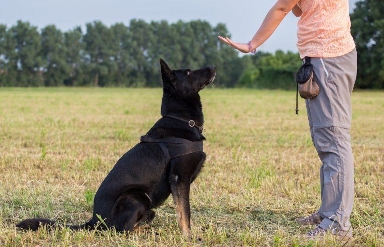 Huấn luyện chó ngồi