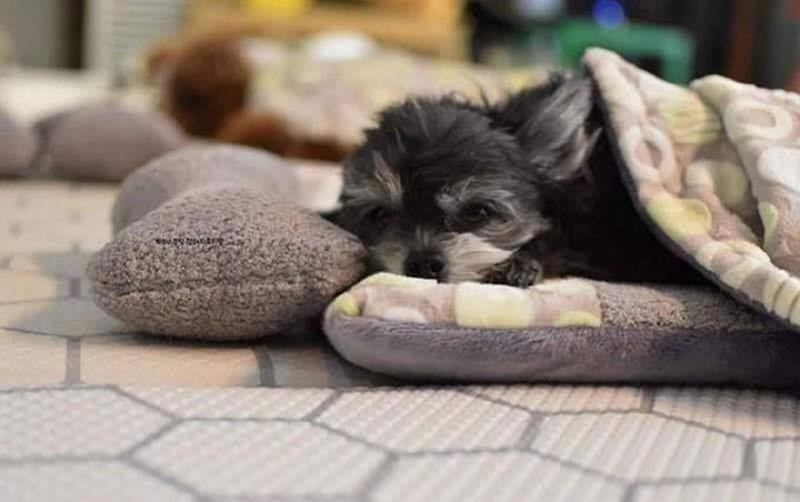 Huấn luyện chó ngủ đúng chỗ