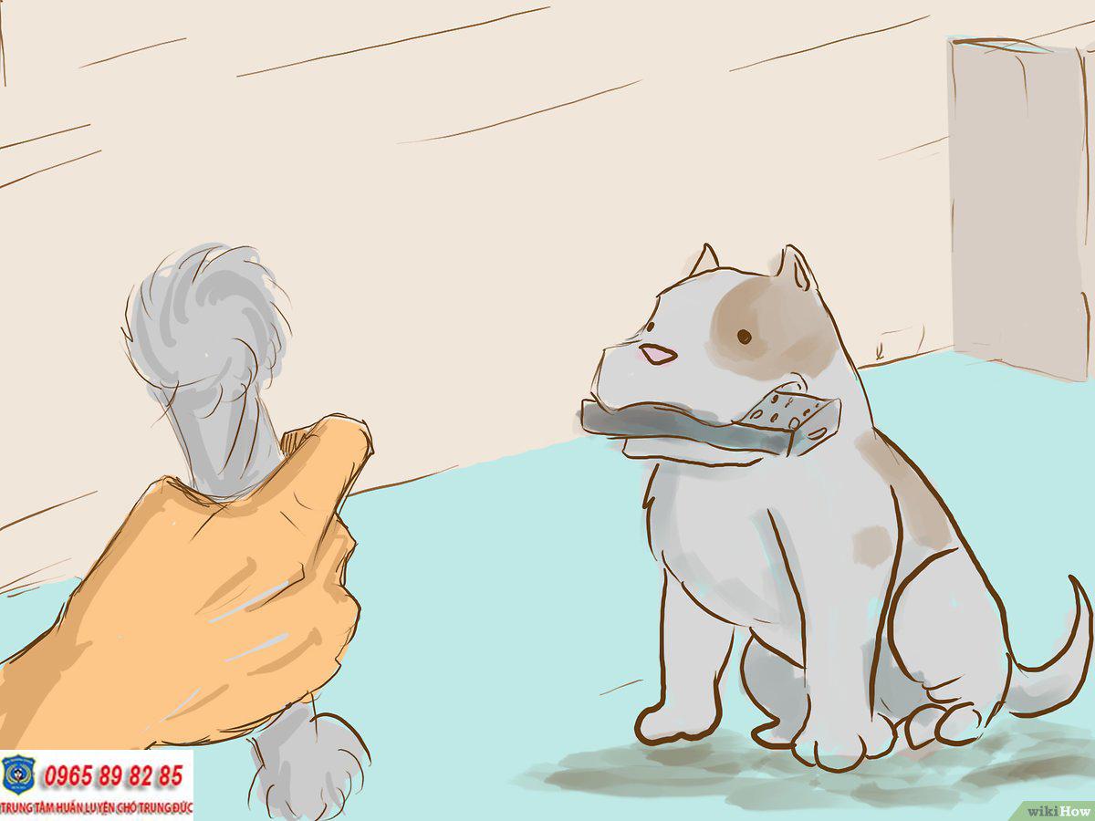 huấn luyện chó nhặt đồ