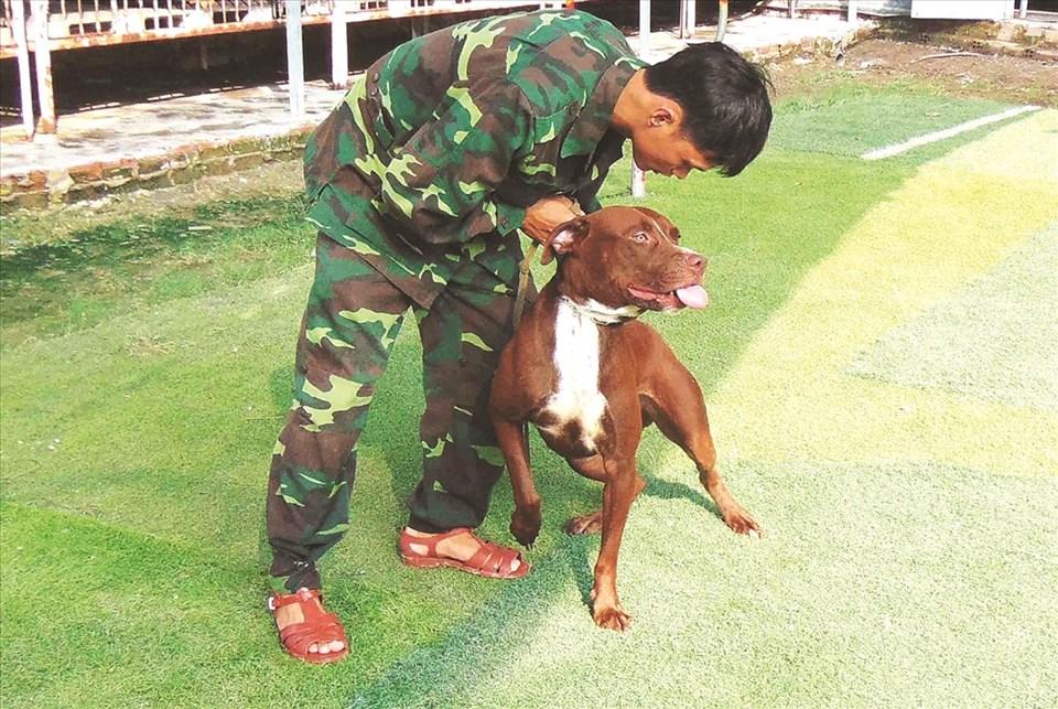 Huấn luyện chó Pitbull