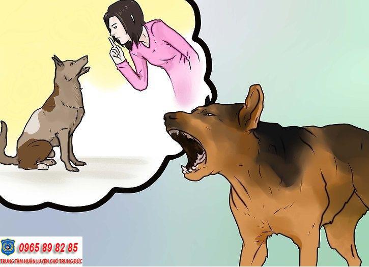 huấn luyện chó sủa