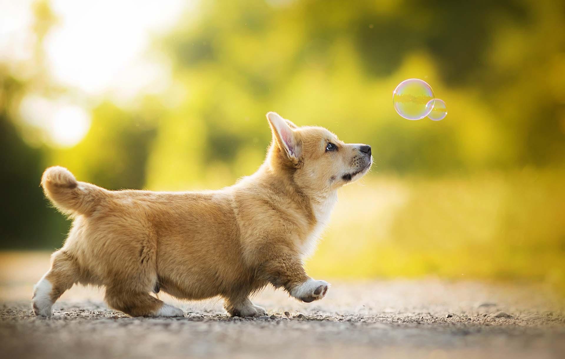 Cách huấn luyện chó từ nhỏ